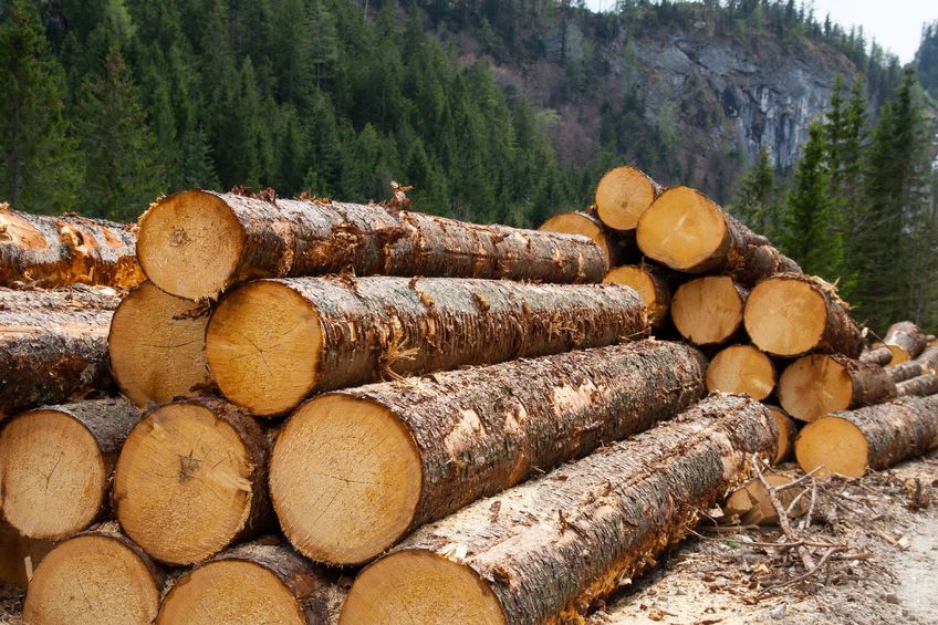 Bc Lumber Seeks To Regain The Spotlight
