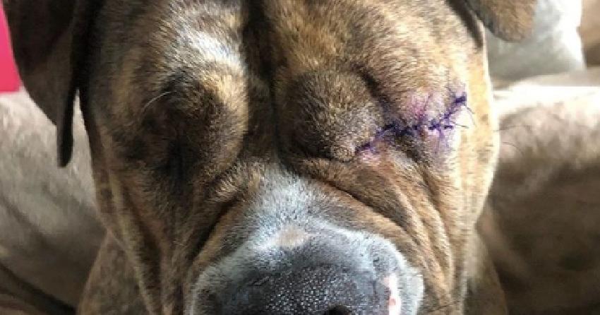 'Paws it Forward' Kelowna raising funds for dog missing both eyes