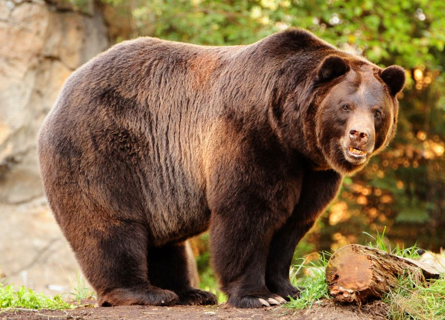 Grizzly bear kills mother and baby daughter in Canada