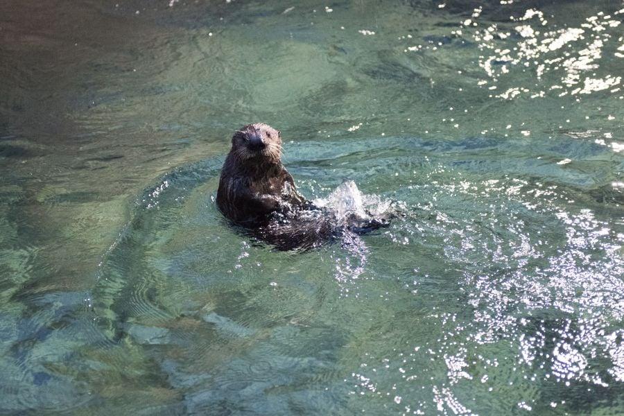 of rehabilitation at the alaska sealife center in seward ak
