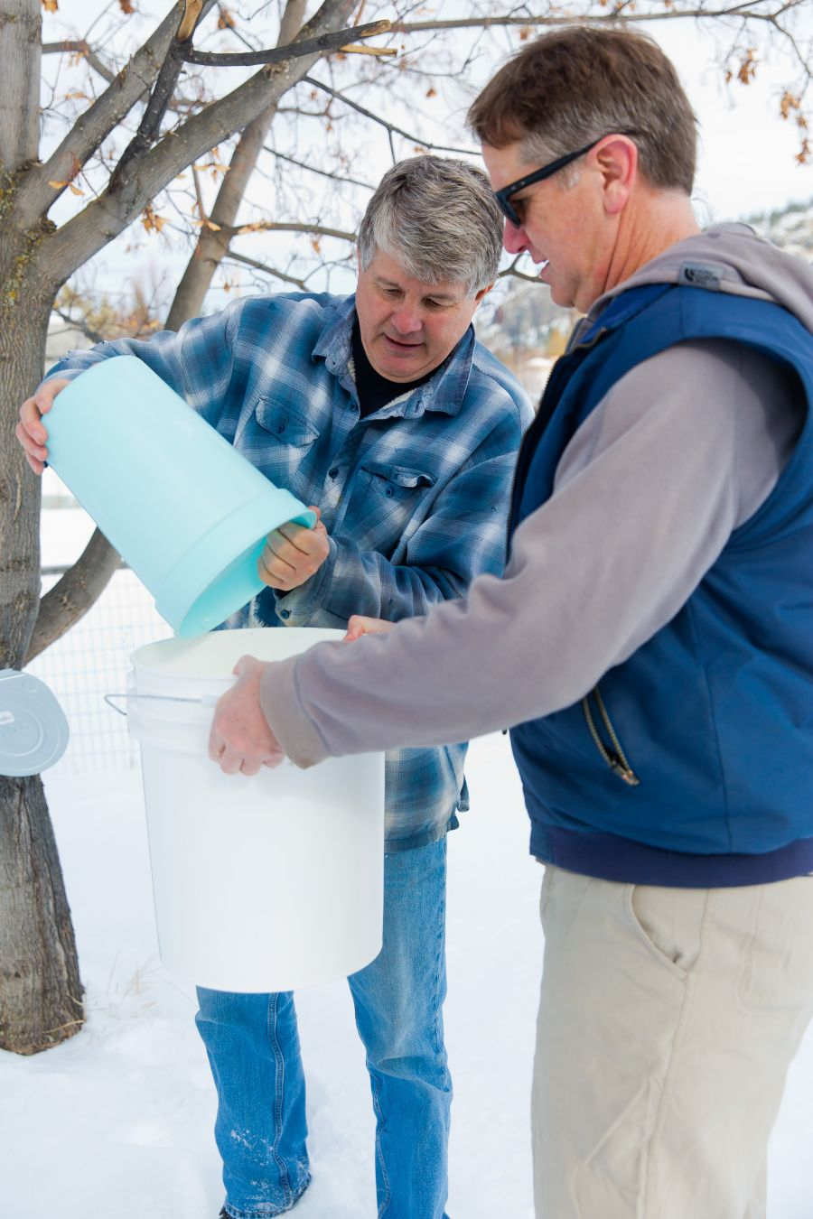 <who>Photo Credit: NowMedia</who>Roch Fortin pours harvested sap water into a bucket held by friend Bernie Ens.