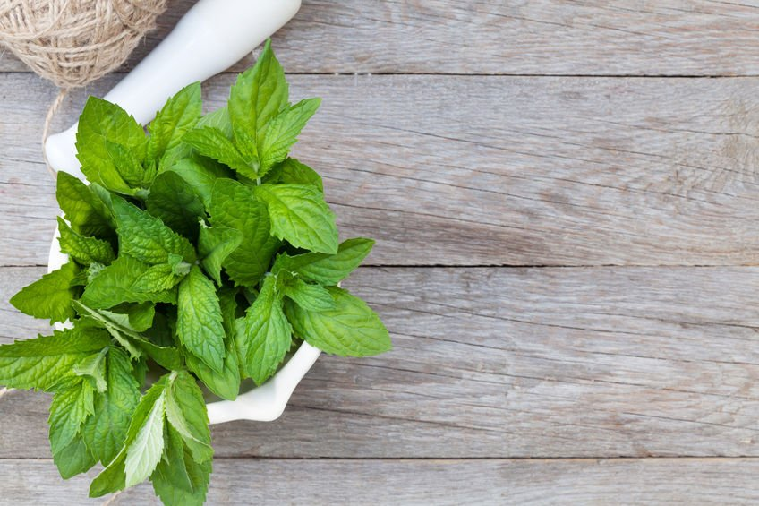 6 plants that naturally repel mosquitoes for What plants naturally repel mosquitoes