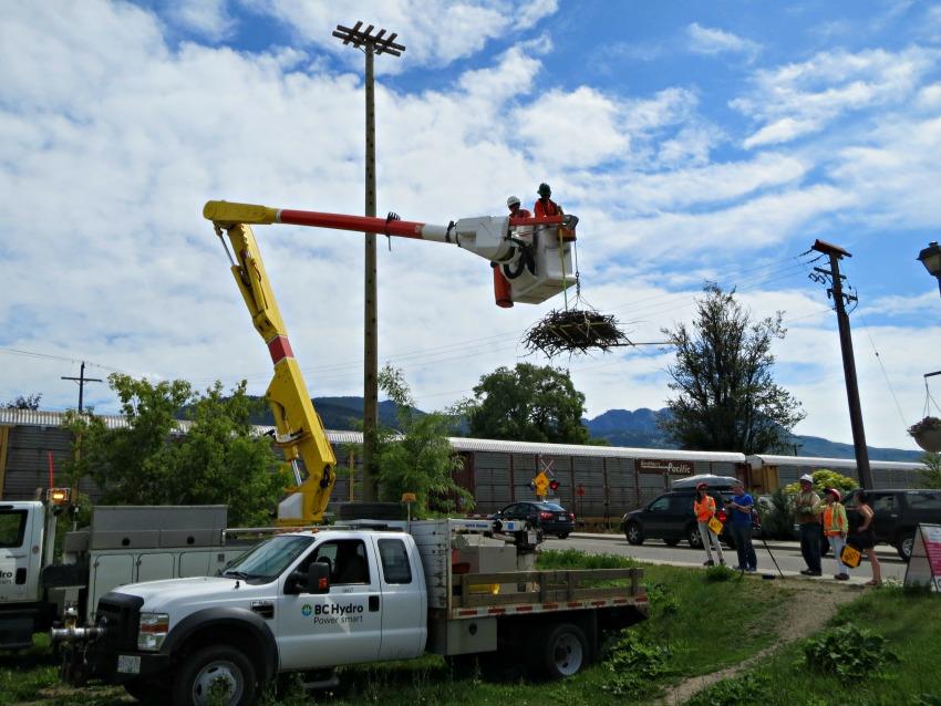 Animals causing problems on B C  power lines