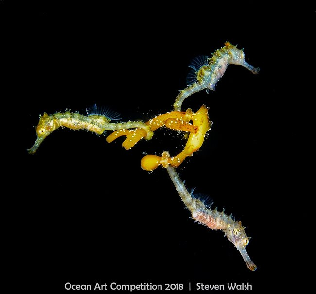 <who>Photo Credit: 2018 Ocean Art Underwater Photo Competition</who>