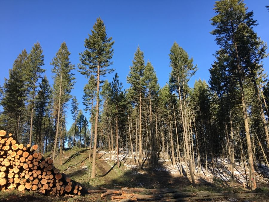 $1.6M wildfire risk mitigation project gets underway in Kelowna area