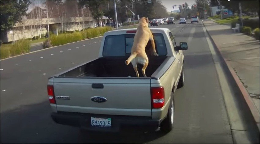 Dogs In The Back Of Pickup Trucks A Problem In Kelowna
