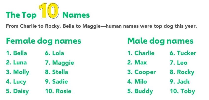 These Were The Top 10 Male And Female Dog Names In Canada In 2019