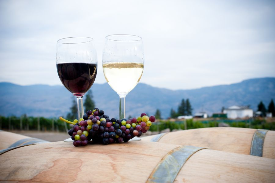 <who>Photo Credit: Kalala Organic Estate Winery</who>
