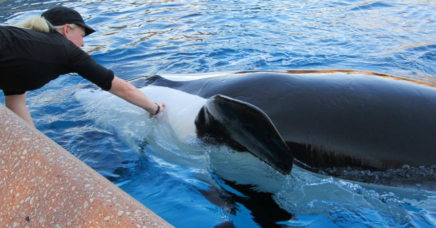 Abandonment charges of animal cruelty against the park Marineland