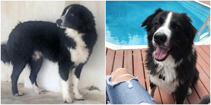 <who>Photo Credit: Contributed</who>Left: Odie in the shelter in Iran. Right: Odie enjoying his new life in Kelowna.