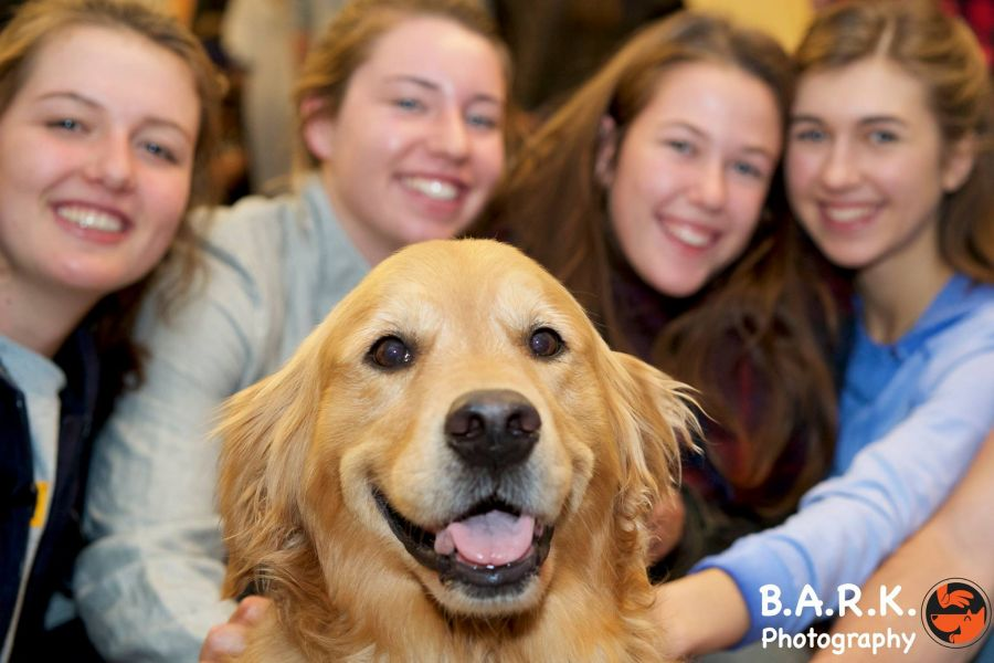 <who> Photo Credit: B.A.R.K.'s Facebook </who> B.A.R.K. has quickly become the most popular stress relief program on the campus.