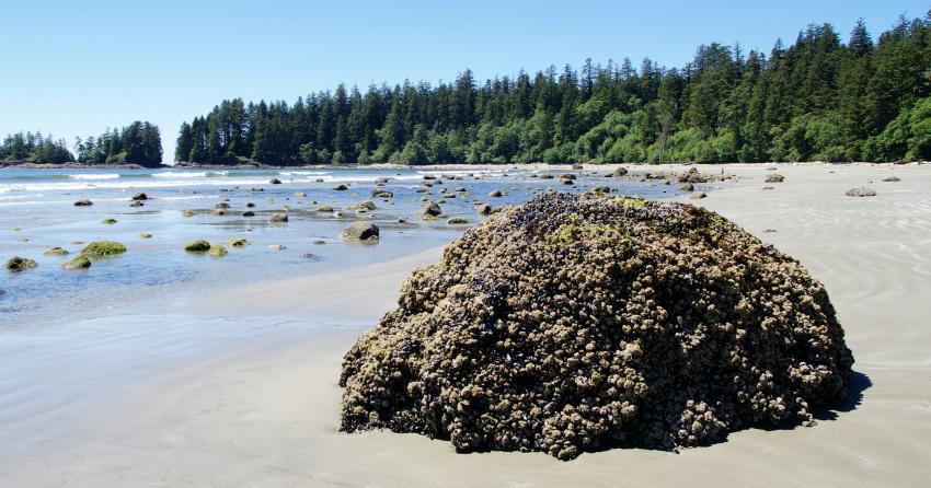 Half of world's sandy beaches face extinction