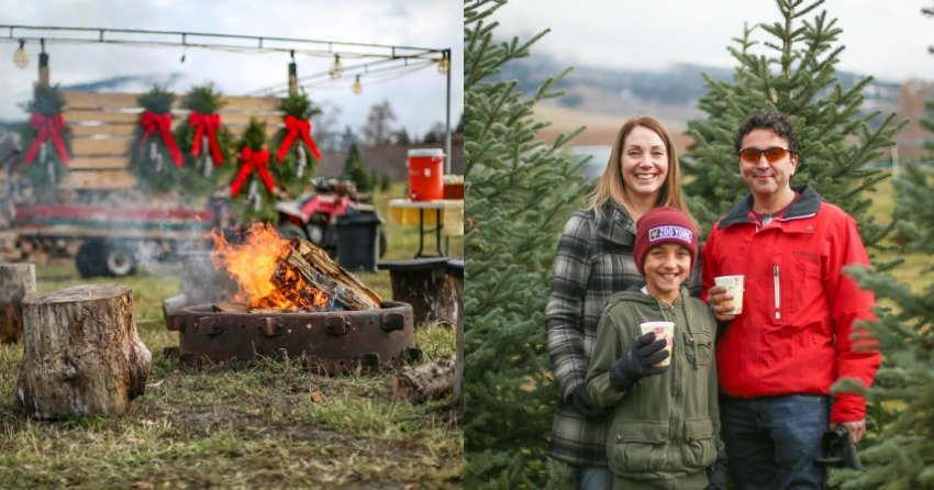 Kelowna Christmas Tree Farm Opens For The Season