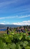 Yoga In The Vines With a Sound Bath, Champagne & Wine Tasting at Evolve Cellars!