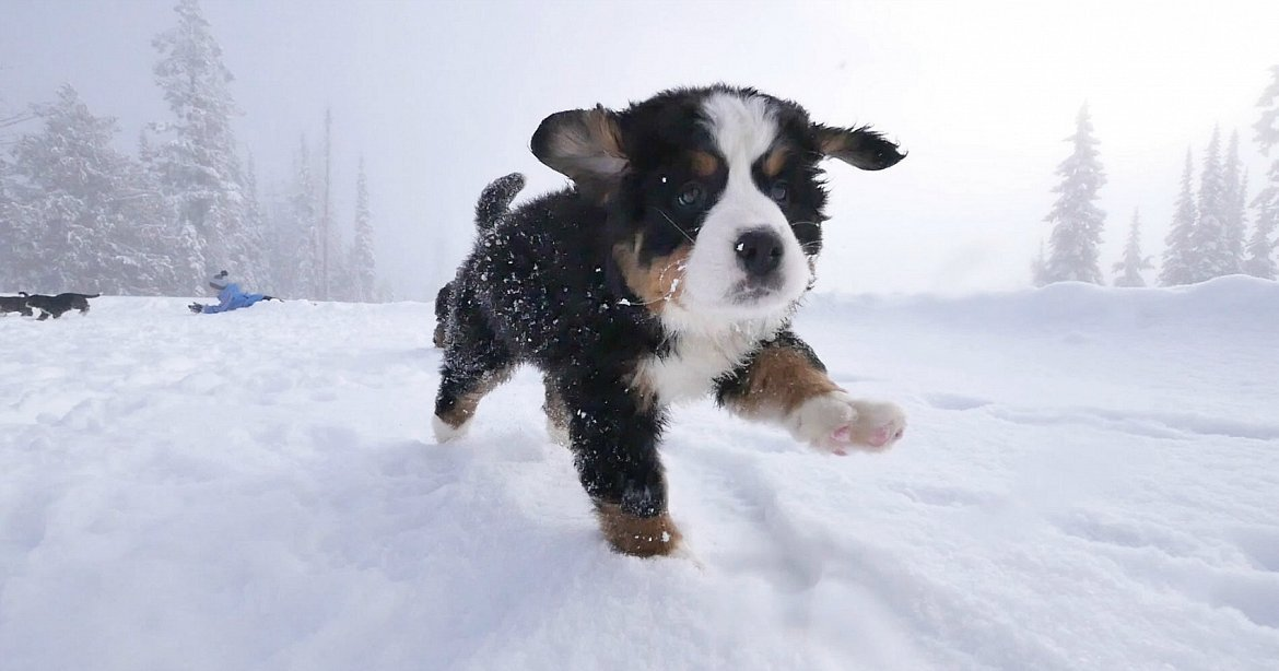 Video Silverstar Surprises Young Skiers With Puppies
