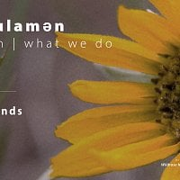 na'ʔk'ʷulamən (what we do): Wild Tea Blends