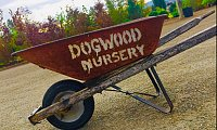 Dogwood Nursery & Landscaping