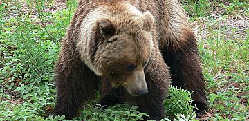 Bear sighting reported at Knox Mountain Park