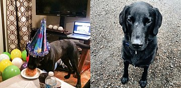 Okanagan family offering $1K reward for missing dog