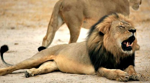 American Dentist Named as Hunter Who Killed Beloved Zimbabwe Lion