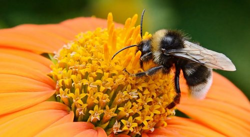 'Bee' cautious of pollinators when preparing your yards and gardens