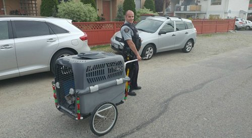 RCMP recover stolen trailer for therapy dogs with help from the community