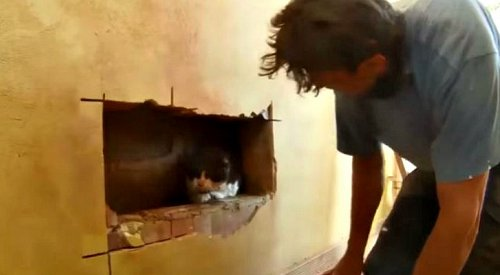 Man Rescues Cat Trapped Between Walls