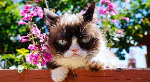 Viral internet sensation Grumpy Cat has died at age 7