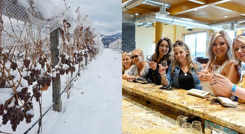 You can go on a free icewine tour in West Kelowna this weekend