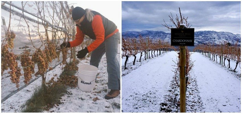 It's Shaping Up to be an Excellent Year for Icewine